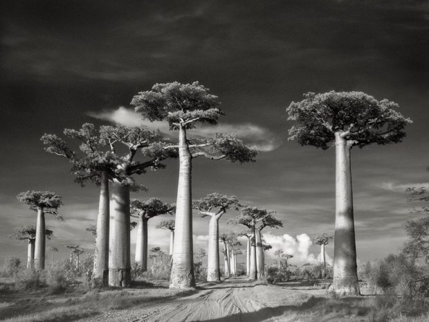 cropped-avenue-of-the-baobabs_02.jpg
